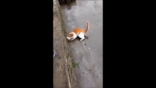 Street fighting between a cat and a mouse 😂