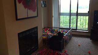 Dog loves homemade ball pit, cat not impressed - Video