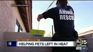 Extreme heat causes more rescue calls for animals - Video