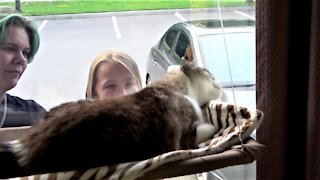 Stella the rescued cat has a special visitor every day