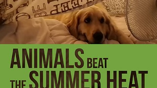 Funny Compilation Of Animals Reacting To Summer Heat