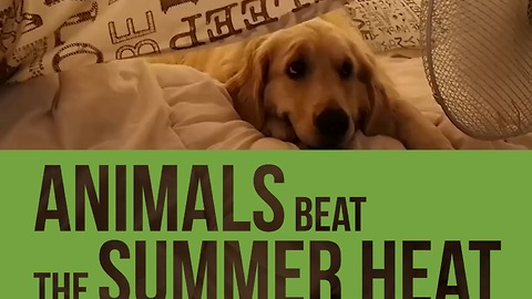 Compilation show animals beating the summer heat!