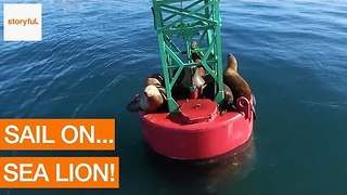 Sea Lions Chill on Buoy in Alaskan Waters - Video