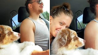 "Aussie puppy ""helps"" her owner drive the car"