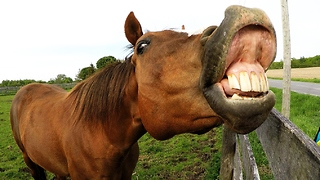 Horse Makes Hilarious Faces After Sharing Cyclist's Unusual Snack - Video