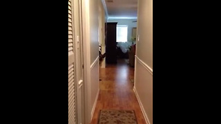 German Shepherd Afraid Of Wood Floor Has The Perfect Solution - Video