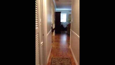 German Shepherd Afraid Of Wood Floor Has The Perfect Solution