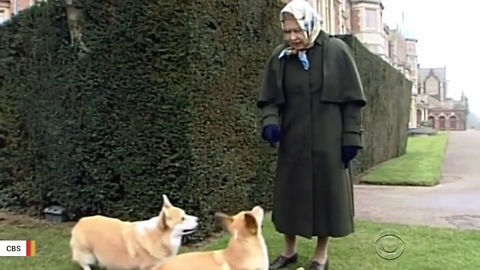 British Royal Family's Newest Canine Addition Is Neither A Corgi Nor From The UK