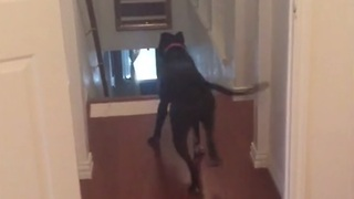 Dog's clever strategy to overcome fear of doorways - Video