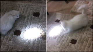 Crazy cat chasing flashlight beam  - Video