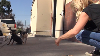 After their owner died, they were thrown out to the streets and became homeless - Video