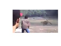 Villagers Panic as Leopard Speeds Through Raiganj - Video