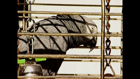 Parrot Custody Battle