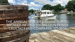 Chesapeake Bay blue crab population concerns - Video
