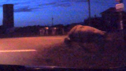 Man and his grandmother encounter bull casually standing at roadside