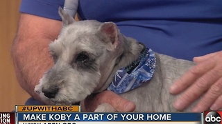 Meet Koby, the Jan. 1, 2017 Rescues in Action star