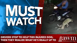 Drivers Stop To Help This Injured Dog, Then They Realize What He's Really Up To - Video