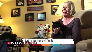 20-year-old special needs cat reunited with Brookfield family - Video
