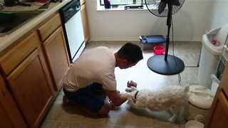 Devout Dog Prays Before His Meals - Video