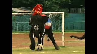 Animal Sporting Heroes - Video