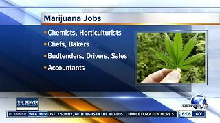 Cannabis Career Fair - Video