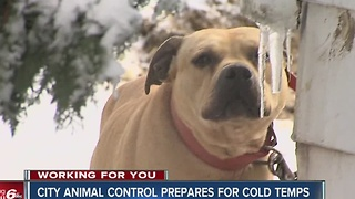 CALL 6: Animal control reminds owners to bring pets in during bitterly cold temps - Video