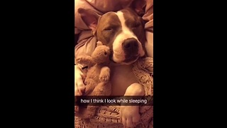 Allow this pit bull to accurately portray how we all feel about sleeping. The reality is too funny! - Video