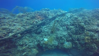 Cruise ship anchor destroys ancient coral reef - Video