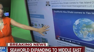 1st SeaWorld park without orcas opening in Abu Dhabi in 2022 - Video