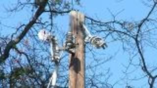 Tree Pruning Near Utility Lines - Video