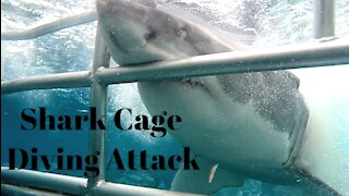 Great White Shark Cage Diving Attack in Australia
