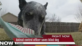 Animal control officer saves blind dog - Video