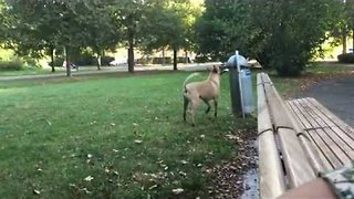 Clever dog Helps Owner by Putting Trash in the bin