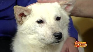 Looking Back at the Year in Animal Rescues - Video