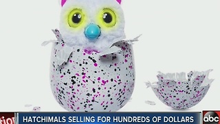 Hatchimals selling for hundreds of dollars - Video
