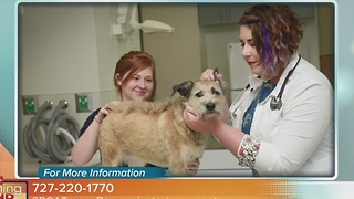 SPCA Tampa Bay - Video