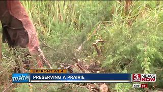 Council Bluffs brush removal - Video