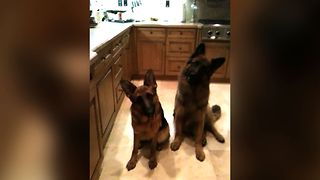 Mom Gets Cutest Reaction After Asking Two Dogs If They Want A Ball - Video