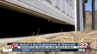 Marley's Mutts Dog Rescue buys property for rescue ranch - Video