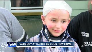 Boy attacked by two dogs is out of the hospital - Video