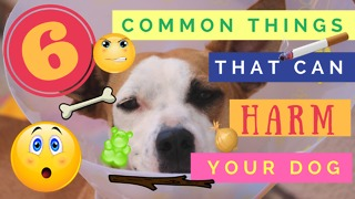 6 Common Things That Can Harm Your Dog