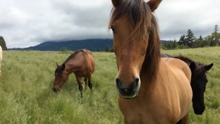Formerly abused and abandoned horses enjoy new life on a horse sanctuary - Video