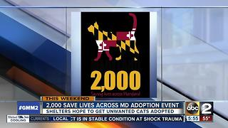 Cat adoption fees waived in July for adoption event - Video