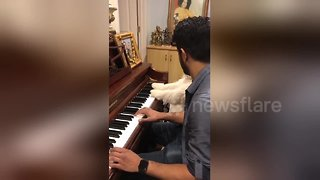 Musical pup learns how to play the piano
