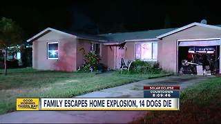 Home explosion kills 14 dogs, sends one person to the hospital - Video