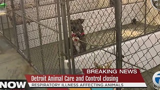Detroit Animal Care and Control closed due to animal illness - Video