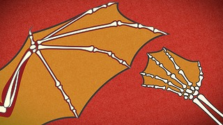 HowStuffWorks Animations: How Bats Fly - Video