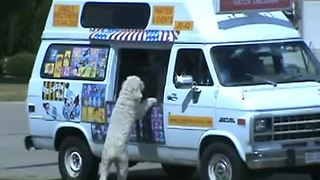 Excited dog visits ice cream truck - Video