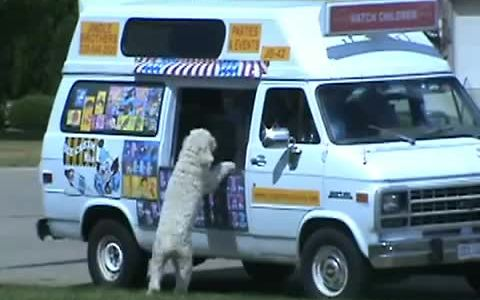 Excited dog visits ice cream truck