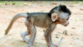 Why Young Monkey Want To Steal Baby Monkey - Video